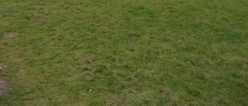 grass-350x150