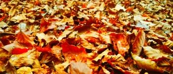 leaves-350x150